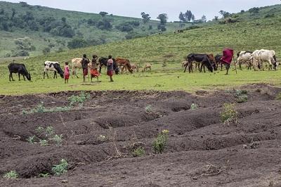 هشدار سازمان ملل نسبت به گسترش کشت و صنعتهای بزرگ کشاورزی در جهان