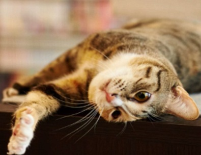 Library cat outlasts councilman that wanted him gone
