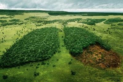 اهمیت و فواید منابع طبیعی تجدیدشونده
